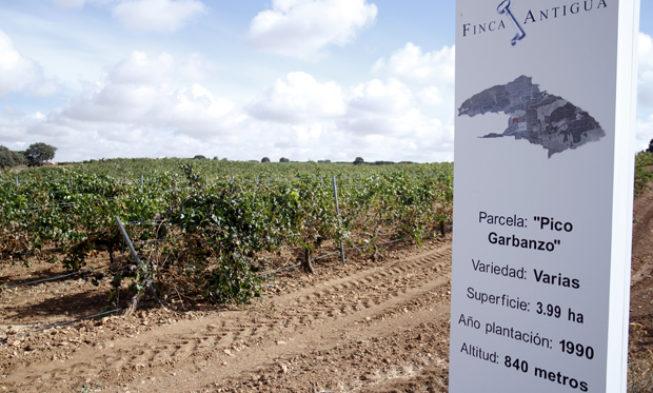 Enoturismo en Finca Antigua