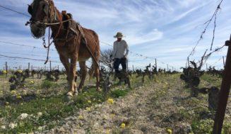 David Léclapart y Alejandro Muchada crean Lumiére Wine Club, en el Marco de Jerez