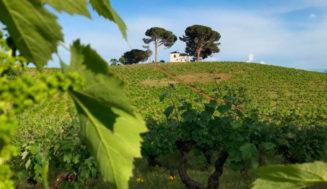 Los nuevos Vinos de Villa y Paraje de la D.O. Bierzo ya piensan en el siguiente paso