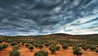 Nueva norma para regular el mercado del aceite de oliva, en trámite