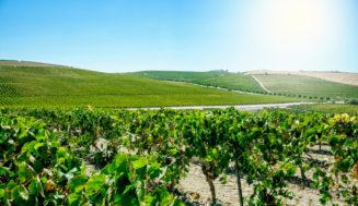 España alcanza el 13% de la superficie de agricultura ecológica